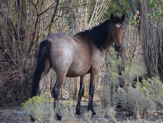 Wild Mustang Photo #12