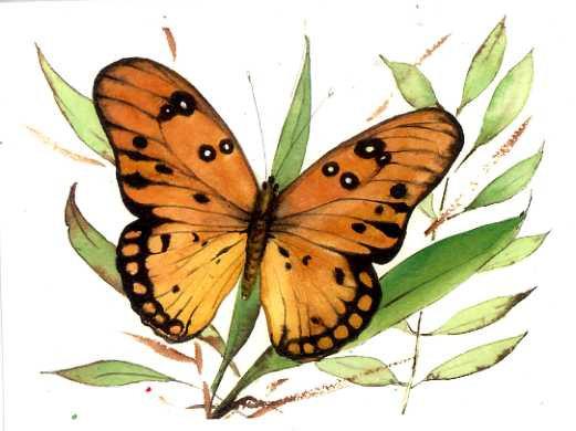 Golden Treasure Butterfly