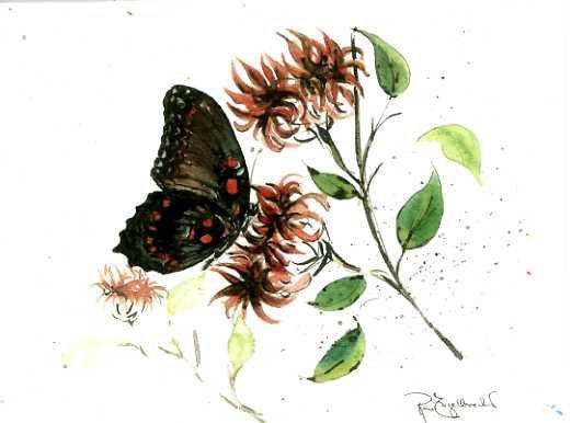 Butterfly's Dessert