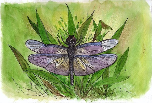 Searcher Dragonfly
