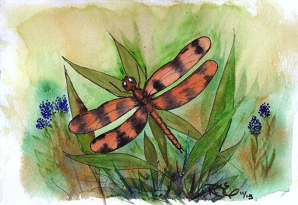 Navigator Dragonfly
