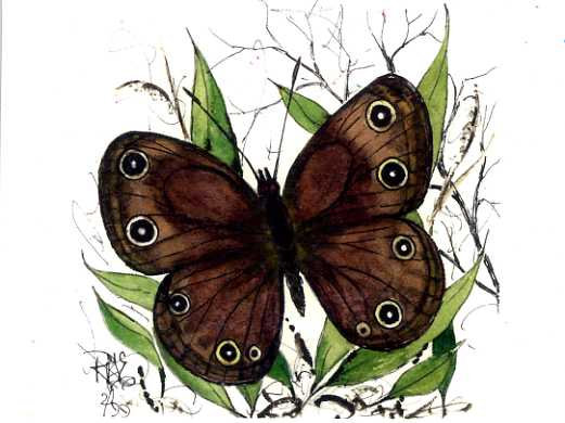 The Buckeye Butterfly