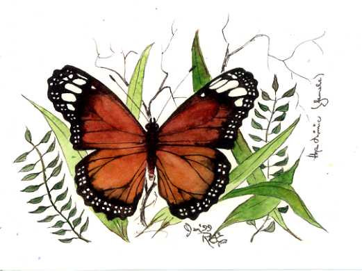 The Mimmic Butterfly