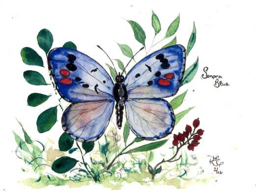 Blue Angel Butterfly