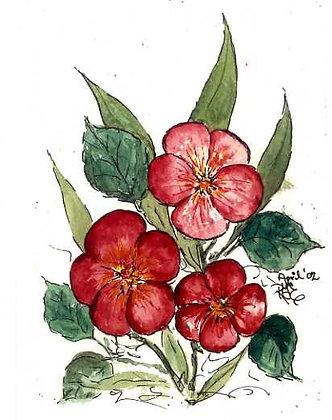 Pansies in Bloom