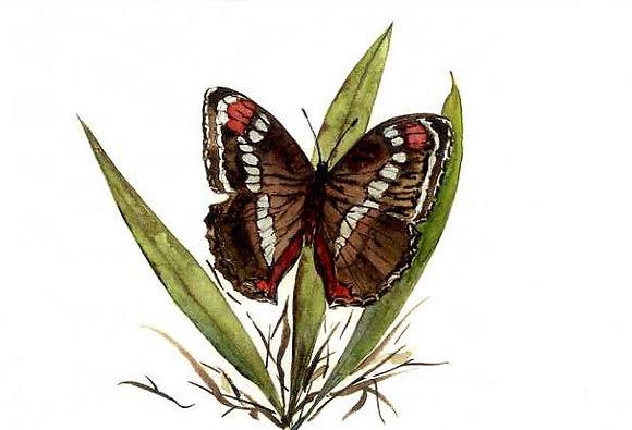 Garden King Butterfly