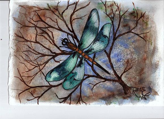 Twilight Traveler Dragonfly