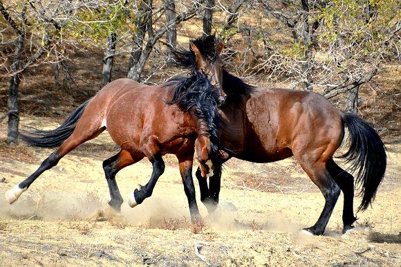 Wild Mustang Photo #8