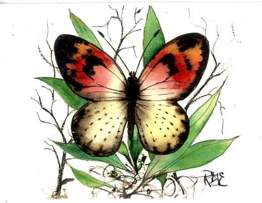 Sara Orange's Flight Butterfly