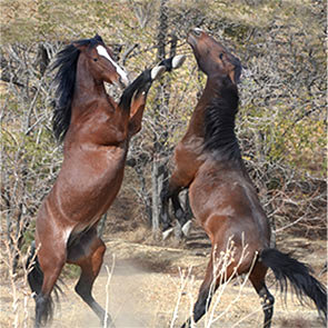 Wild Mustang Photo #1