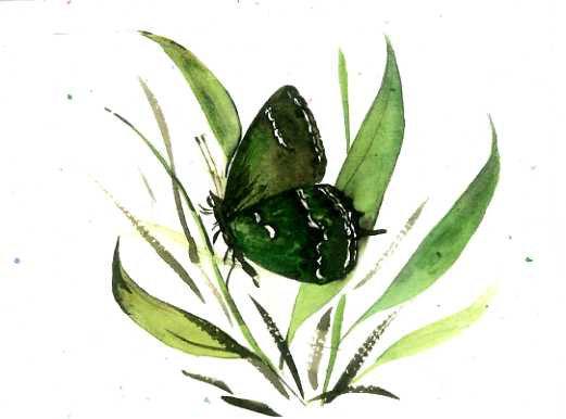 Green Majesty Butterfly