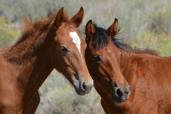 Wild Mustang Photo #4