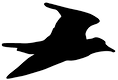 Logo Pluvier Kildir