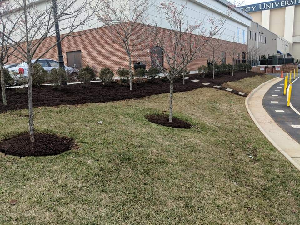 Landscaping at Liberty University