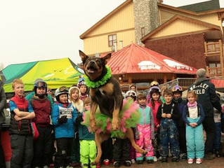 Best Dressed & Dog Trick Comp sponsored by Kimberley Kritters
