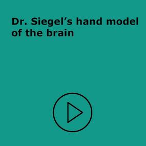 Hand model of the brain
