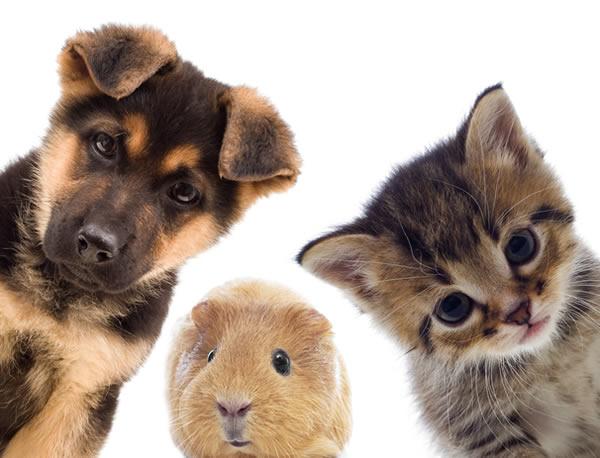 pet-supplies-portland-or