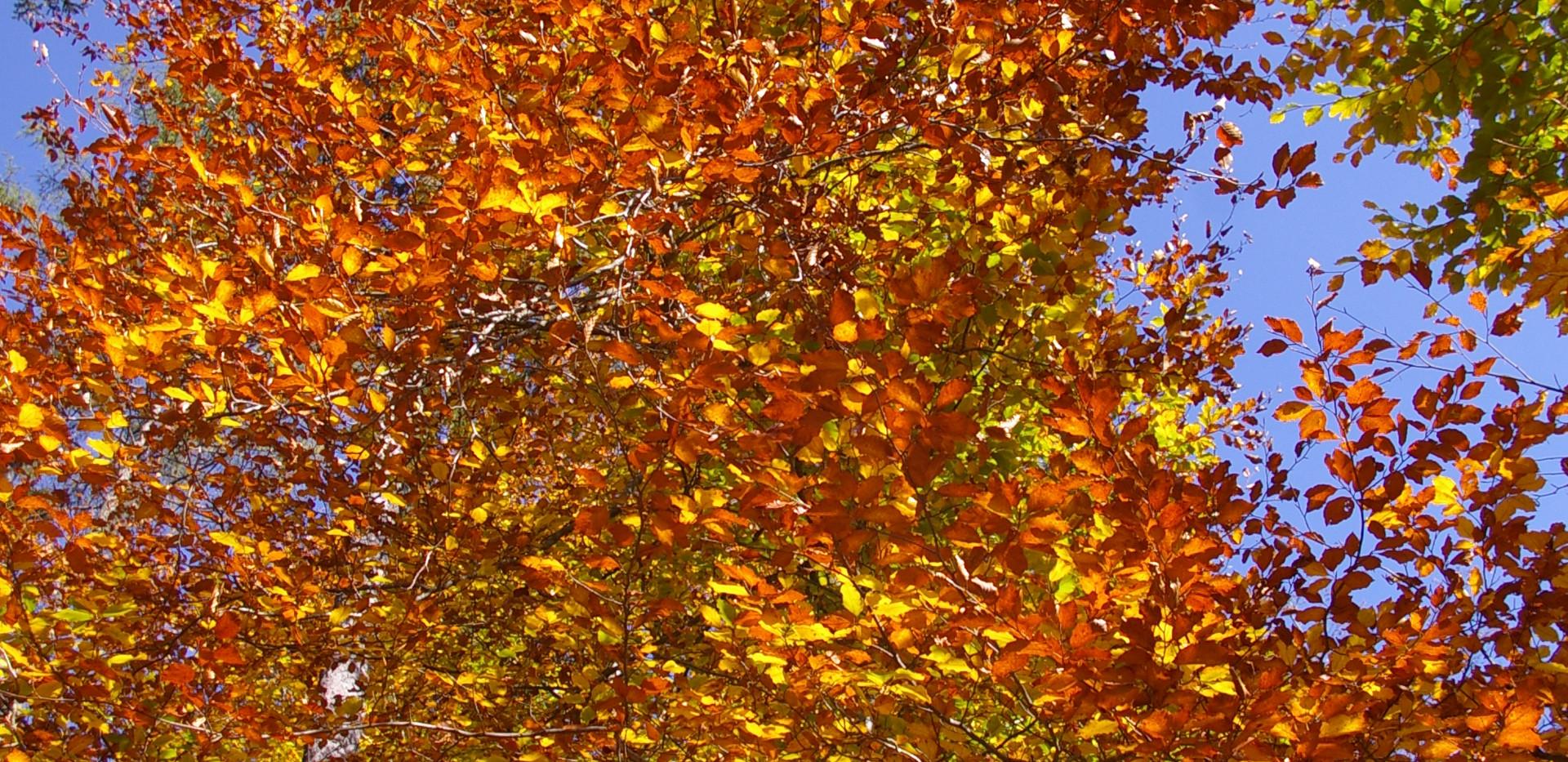 Der Herbst, ein Traum