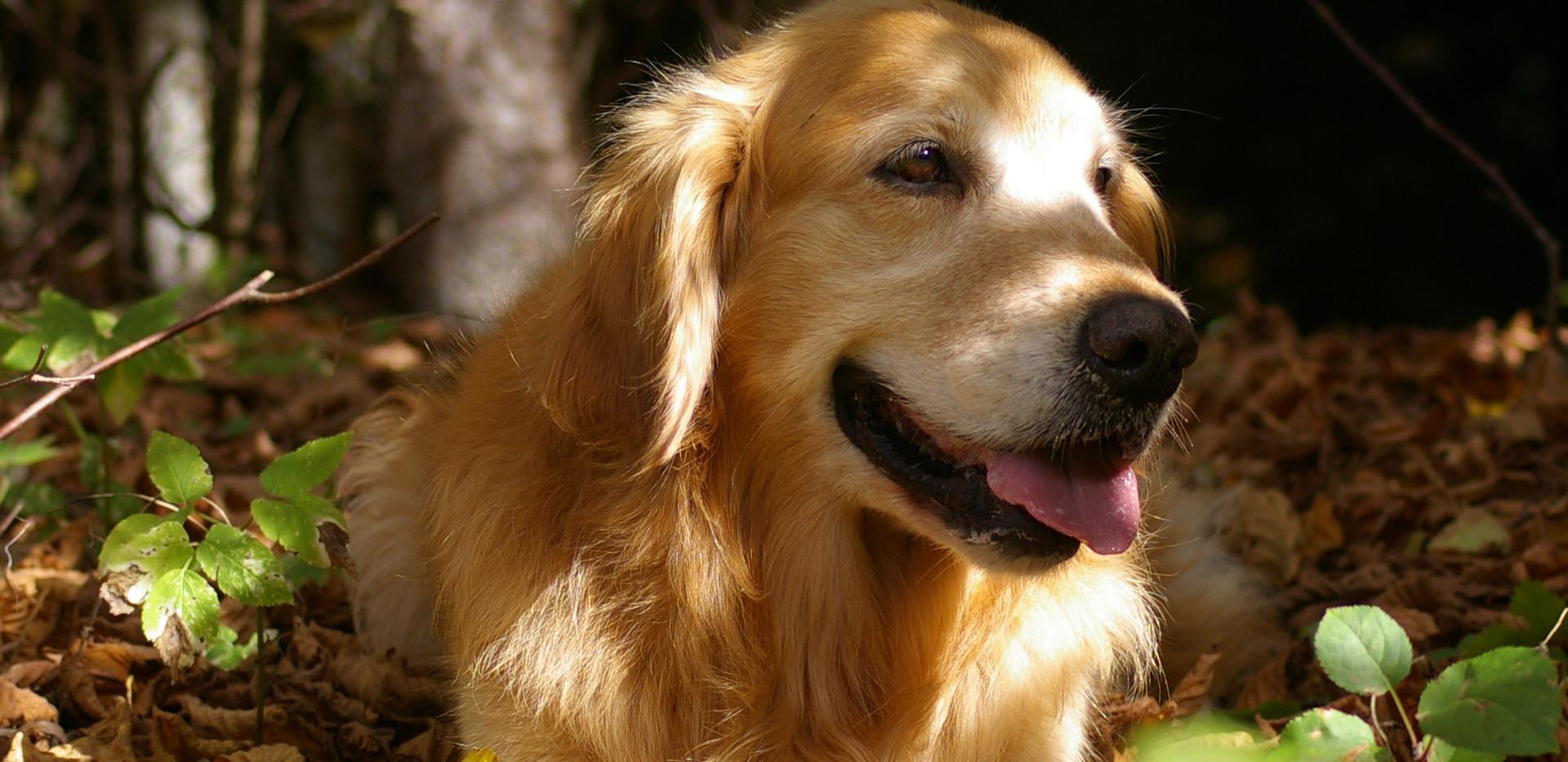 Worte können nicht ausdrücken, wie sehr ich diesen Hund liebe - Winnie