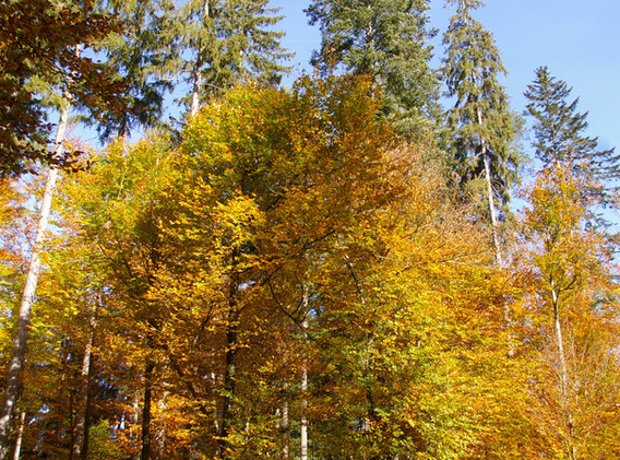 Ich liebe den Herbst