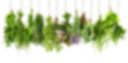 Download-Herbs-PNG-HD.png