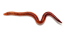 Worms-Free-PNG.png