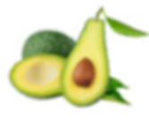 Avocado-Cut-Out.png