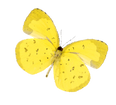 蝴蝶-02.png