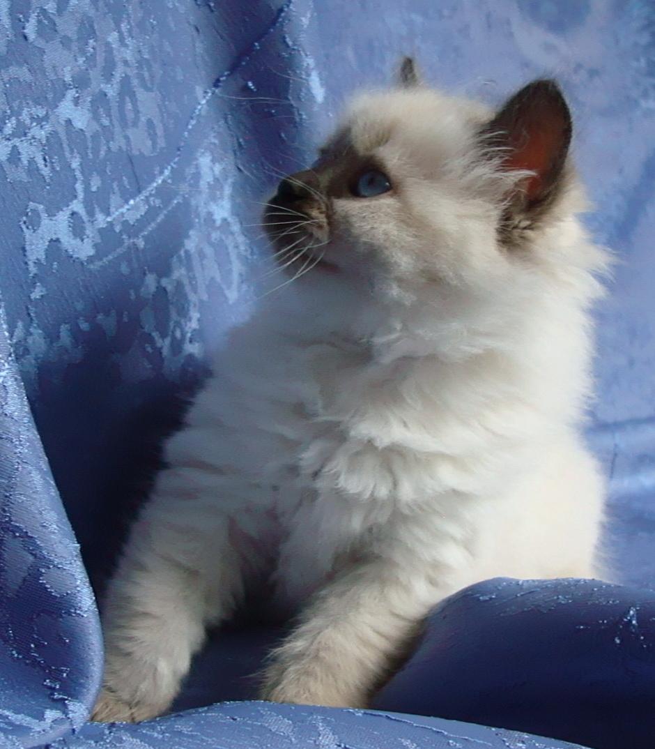 Darcy Maris Stella 1.5 month