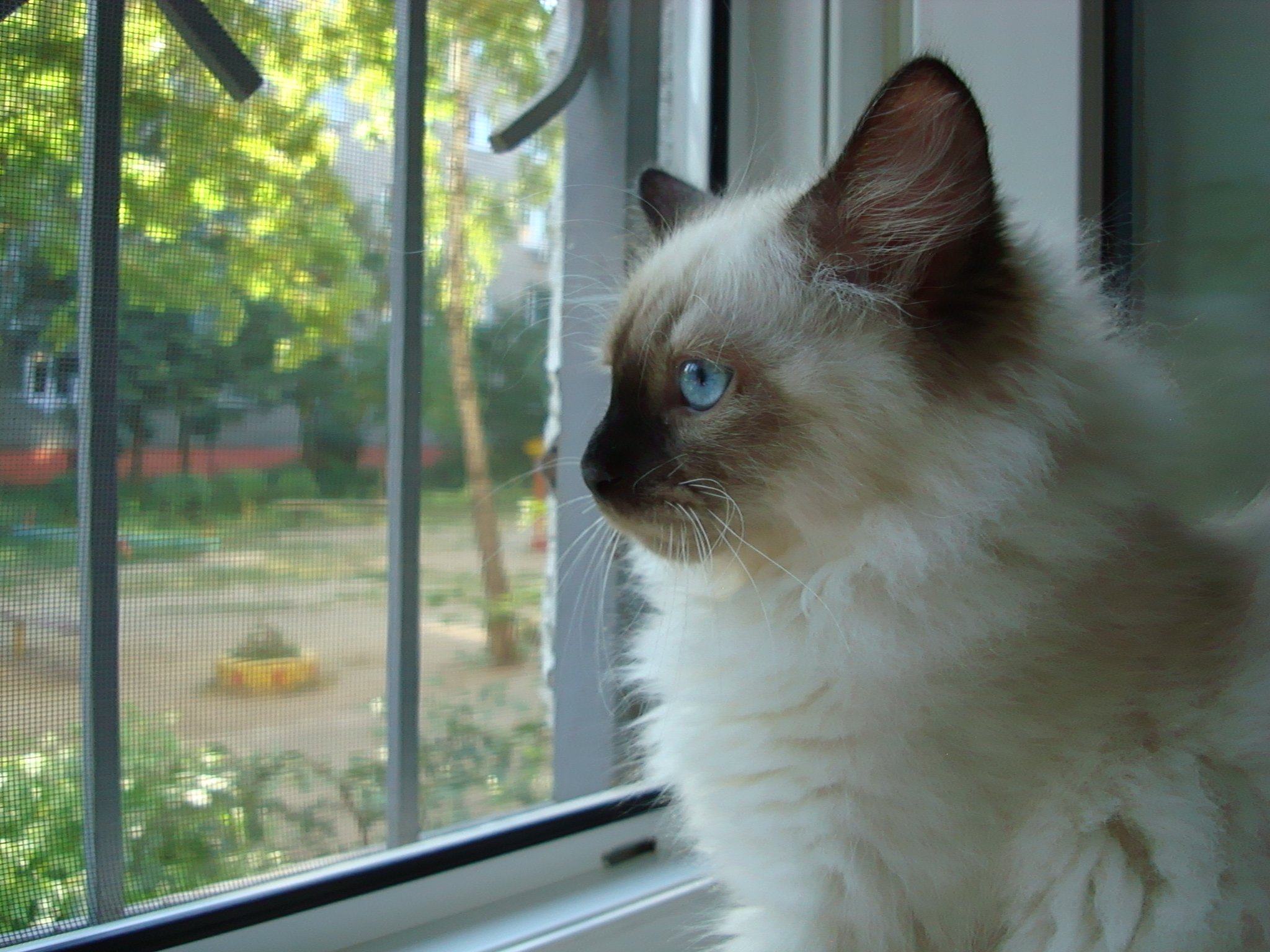 Darcy Maris Stella 3 months
