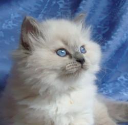 Dorothea Maris Stella 1,5 month