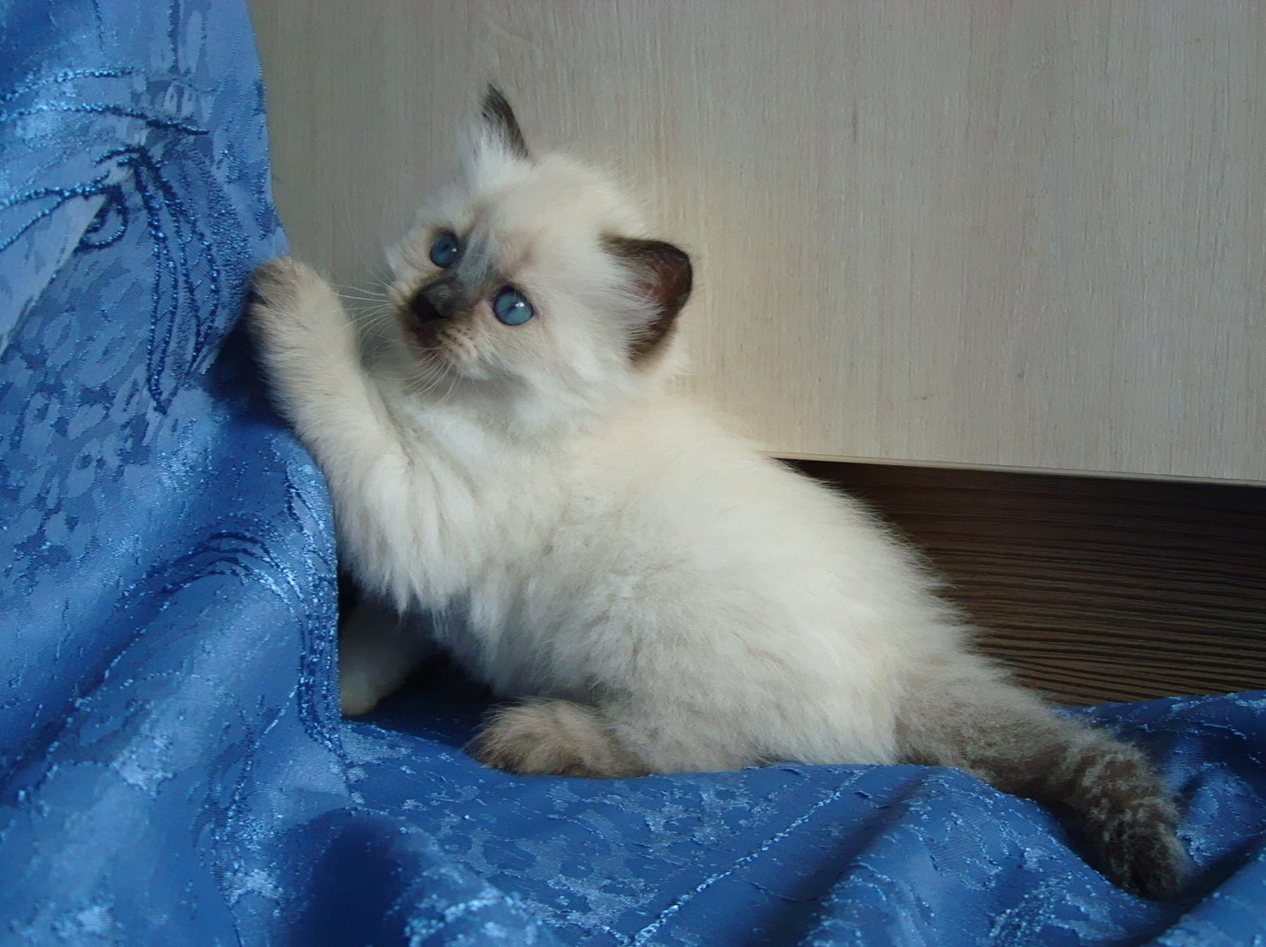 Franechka Maris Stella,fem 4,5 weeks