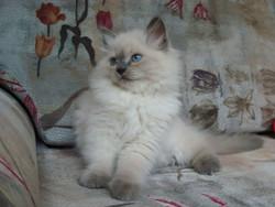 Dorothea Maris Stella 2 months