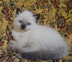 Elina Maris Stella,female,5 weeks