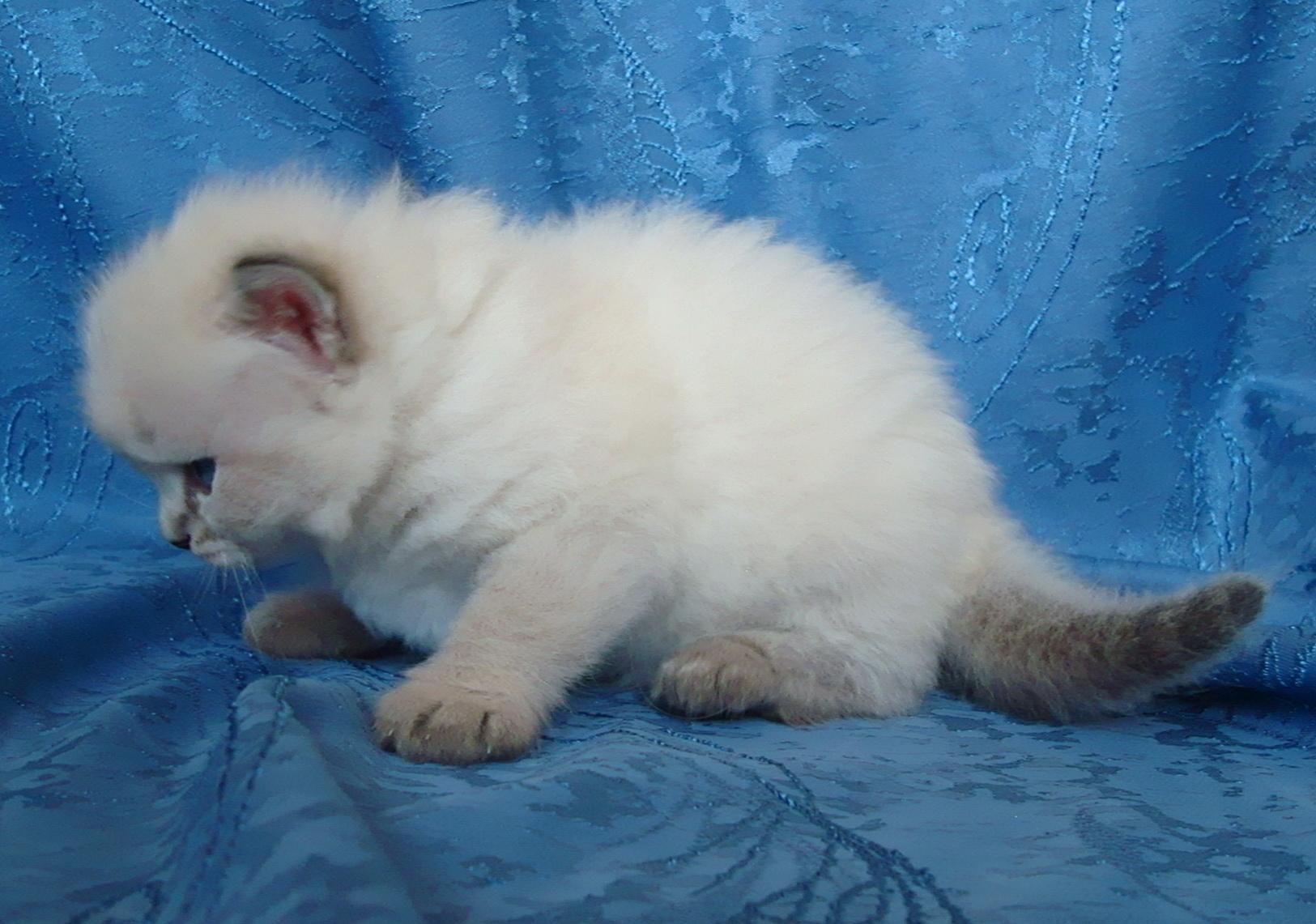 Filimon Maris Stella,male - 3 weeks