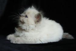 Dolores Maris Stella 1.5 month