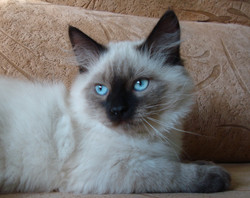 Felix Maris Stella 3 months