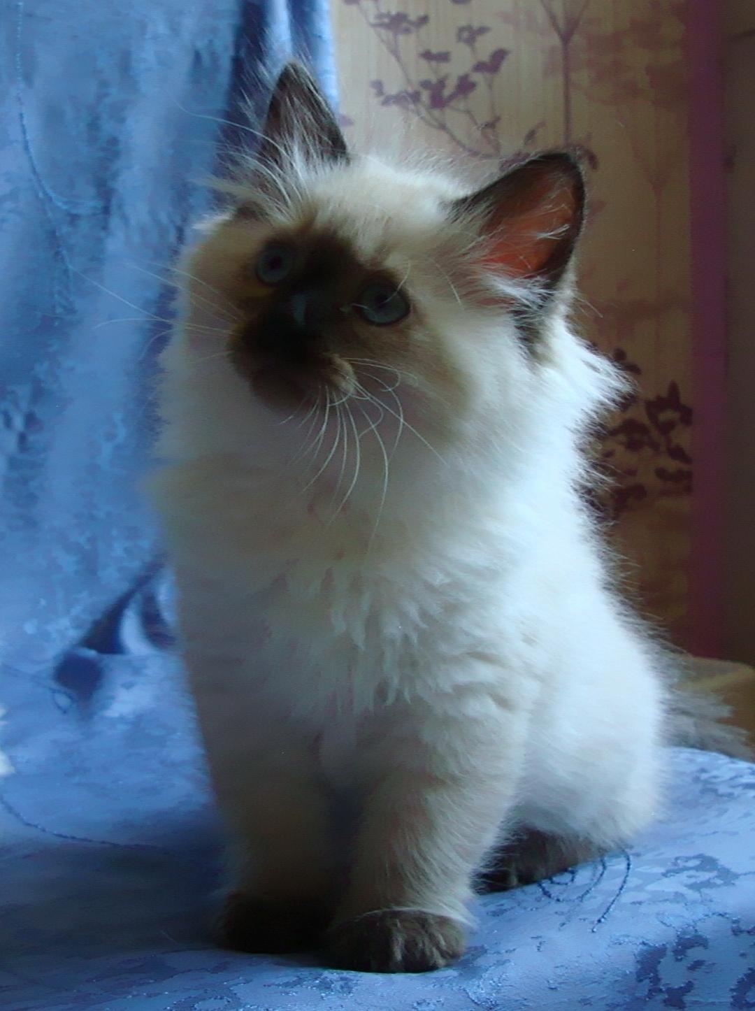 Darcy Maris Stella 2 months