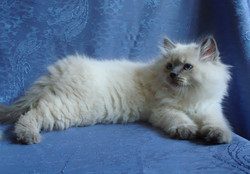 Dolores Maris Stella 2 months