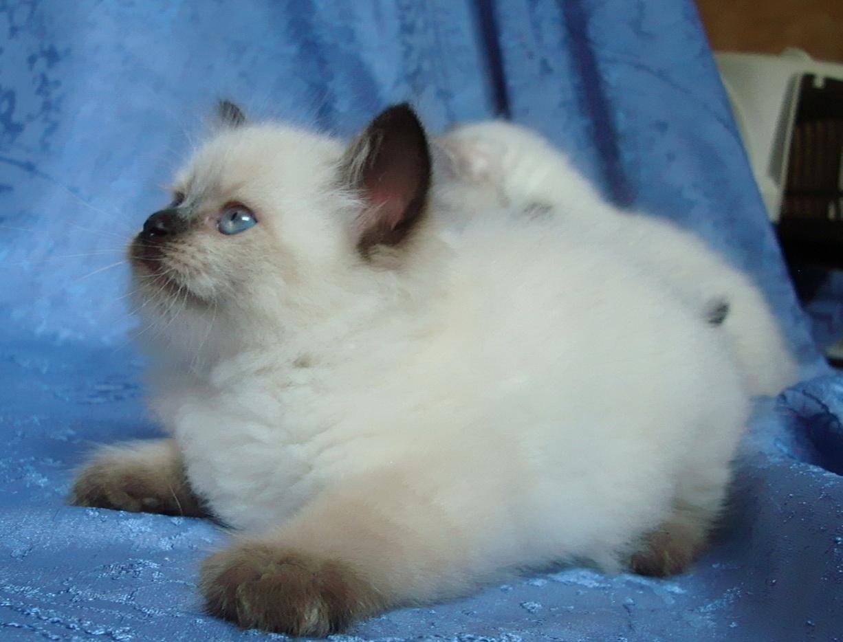 Eva Maris Stella 1.5 months