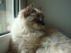 Baryshnya Maris Stella 6,5 months