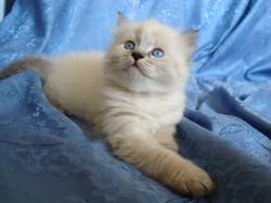 Filimon Maris Stella,male -4,5 weeks