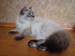 Baryshnya Maris Stella 6 months
