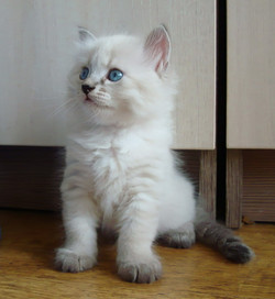 Feodor Maris Stella,male - 4,5 weeks
