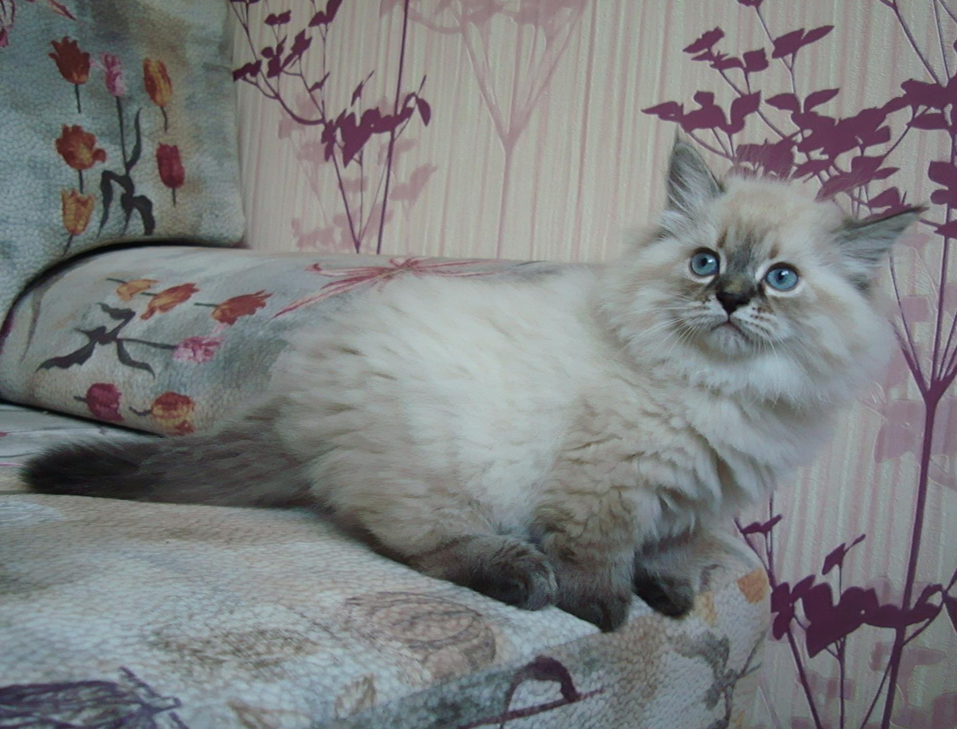 DSDarinka Maris Stella 2 month