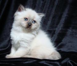 Elizabeth Maris Stella 1.5 months