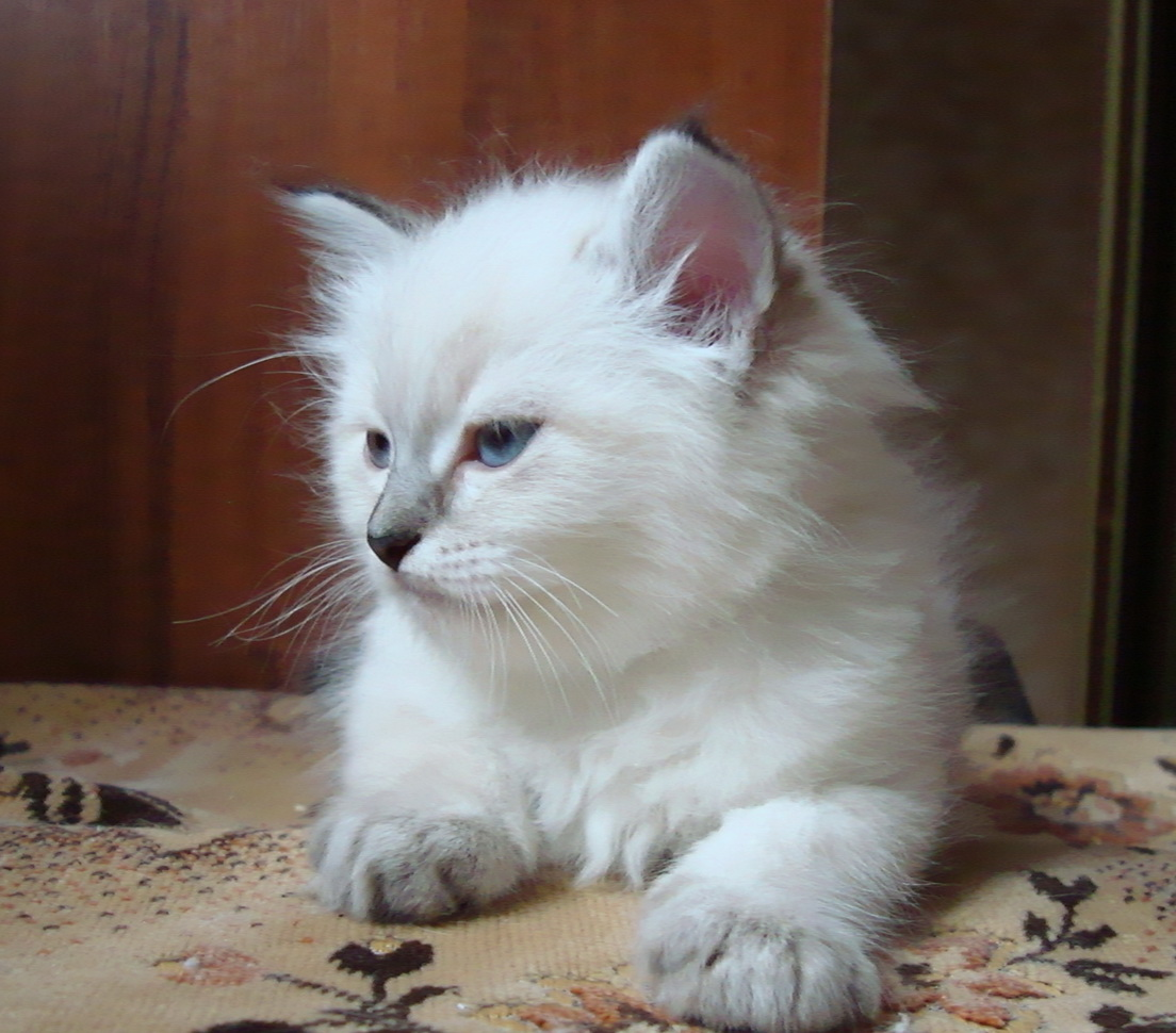 Egorka Maris Stella, male 1.5 months