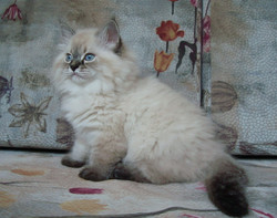 Darinka Maris Stella 2 month