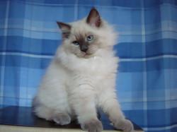 Dolores Maris Stella 3 months