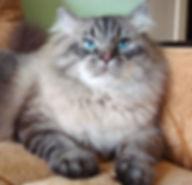 невский маскарадный котяра
